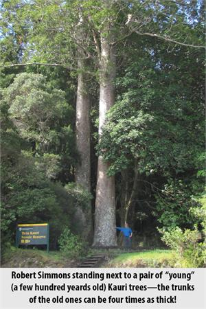 Robert Simmons with Kauri Trees